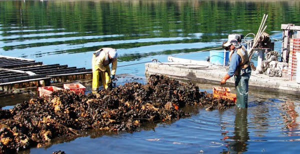 Premieră: producătorii din sectorul piscicol și acvaculturăvor primi subvenții pe motorină